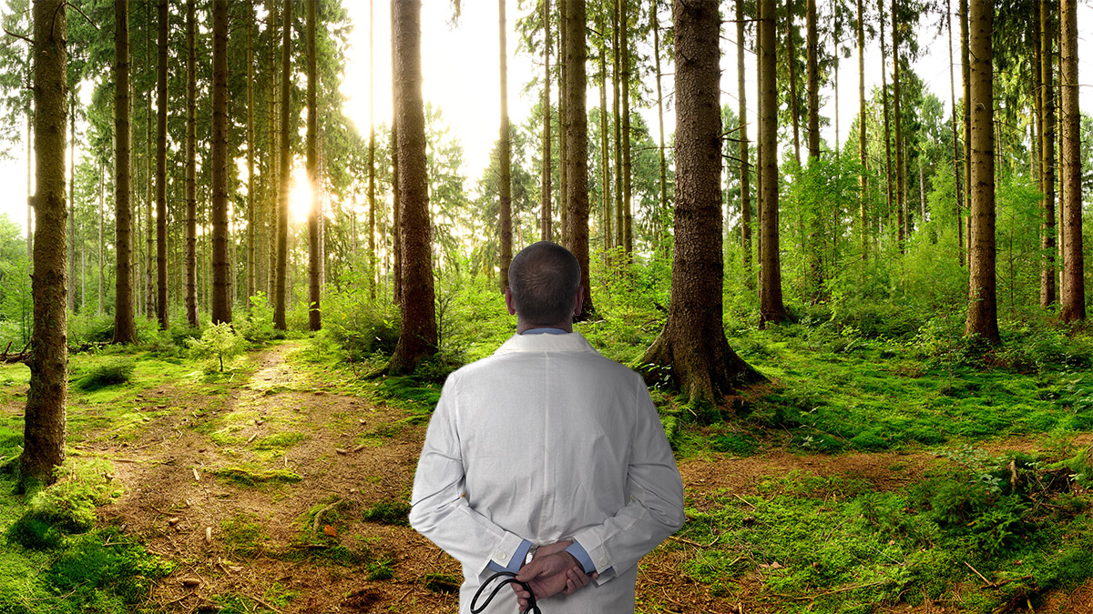 Clinical Handovers – Seeing the Trees but Missing the Forest?